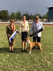 Lockyer Valley Kennel Club Championship Show | Mrs L. Watson (VIC) State Bred In Show | Mr R. Bridgeford (VIC) State Bred In Group | 02.06.19
