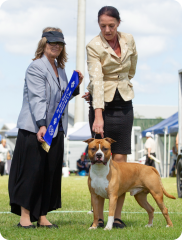 Australian Bred In Group - Ares at Pine Rivers Show - April 2019