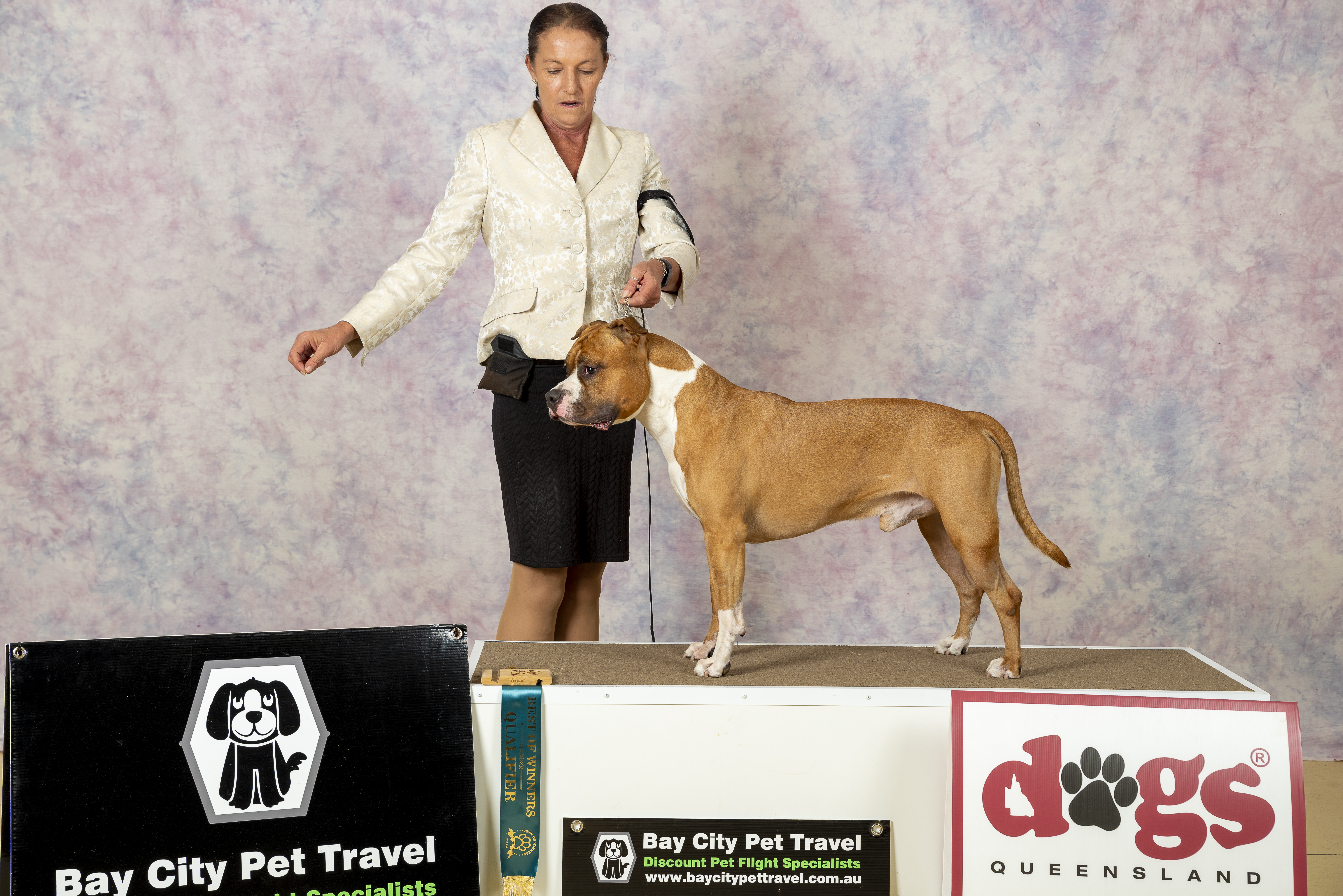 DogsQLD Best Of Winners Competiton   16.11.19