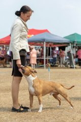 DogsQLD Bushfire Charity Show   Mr Kerry Lee (VIC)   Australian Bred In Group   23.11.19