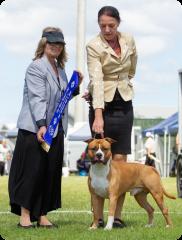 Pine Rivers Kennel Club   Mrs C. Holman (QLD)   Australian Bred In Group   07.04.19