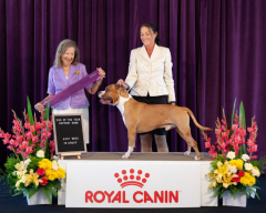 Dog Of The Year Support Show   Ms P. Taylor (Canada)   Australian Bred In Group   20.10.19