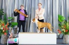 Australian Bred In Group | 14.06.21 | Judge: Mrs Ines Dawes (QLD)